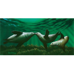 Kissing Seals Limited Edition Giclee
