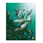 5007 Galapagos Sea Lions