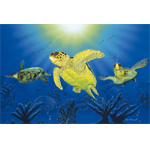 Turtle Dreams Limited Edition Giclee